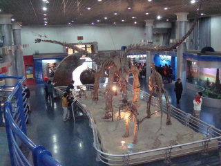 Beijing Museum of Natural History