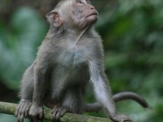 Monkey Forest (Ubud)