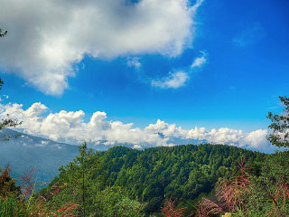 2 Day 1 Night Trip in Alishan - Chiayi © Lily