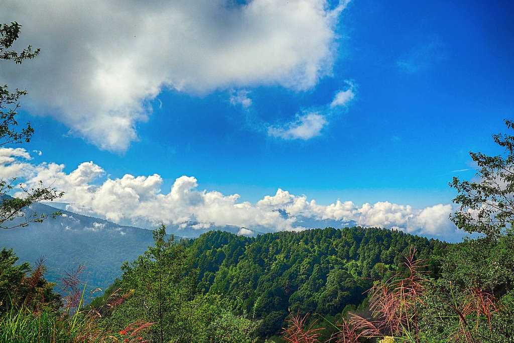 2 Day 1 Night Trip in Alishan - Chiayi - Travel itinerary to
