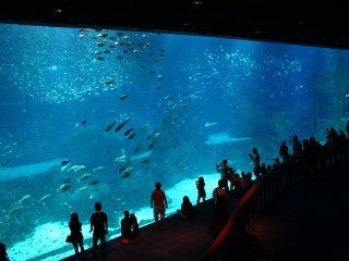 Singapore S.E.A Aquarium Ticket