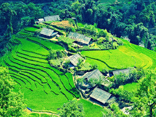 Mu Cang Chai Colorful Cultures - 5 Days 4 Nights © Lily