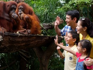 Attraction Combo: 2-in-1: Singapore Zoo + Night Safari Ticket