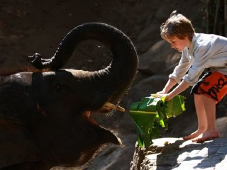 Elephant Show + Tiger kingdom + Home Handicraft village Full Day Tour
