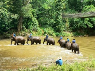 Chiang Dao Elephant Training © chiangmaitotravel