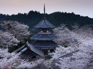 Nara Cherry Blossom Viewing Tour at World Heritage Site Mount Yoshino (Round-trip from Kyoto)