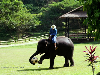 Things To Do With Kids In Chiang Mai